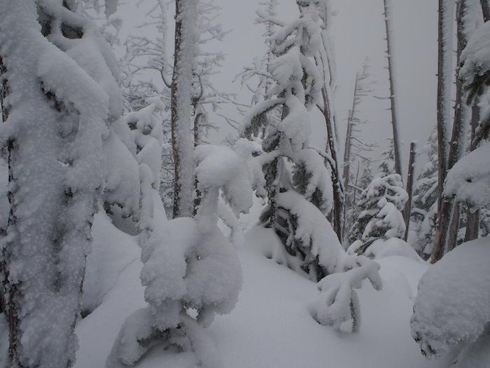 雪でぬいぐるみのようになった低木