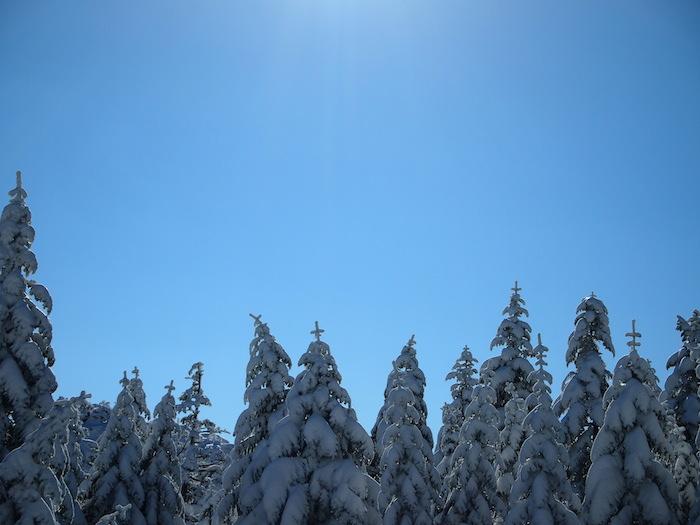 木の上に雪の十字架が!