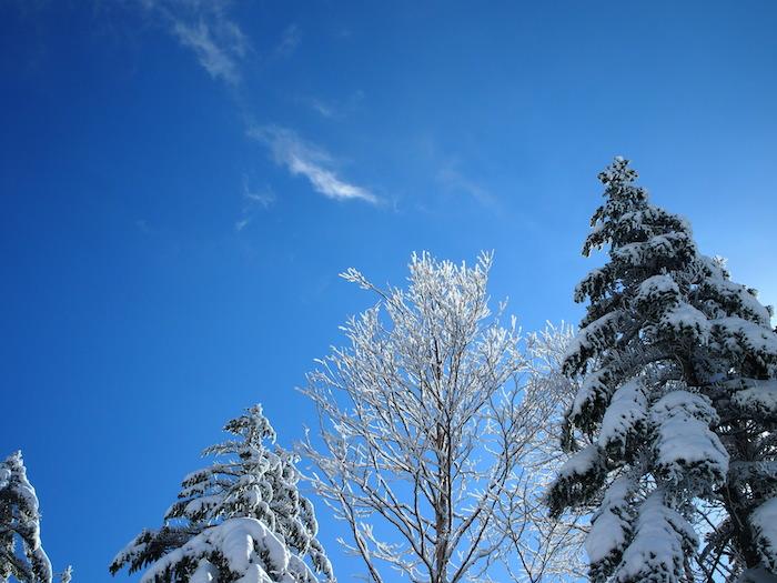 枝が白いだけでこんなに美しいなんてね