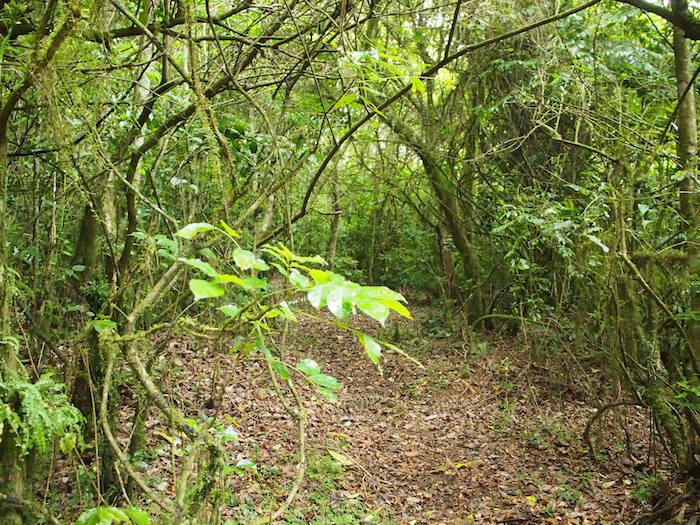 湿度の高い緑の小道を歩いていきます