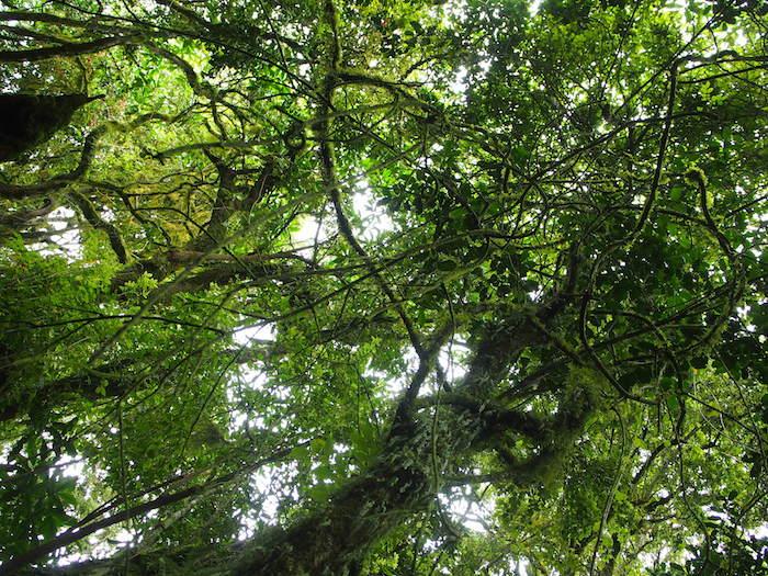 ジャングルの中をひたすら歩いて