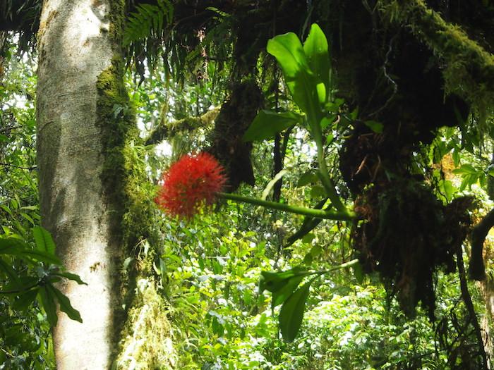 曼珠沙華そっくりの花が木からニョキっと出ていた