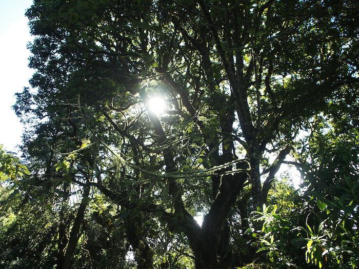 最初は木々の木漏れ日を楽しんでから