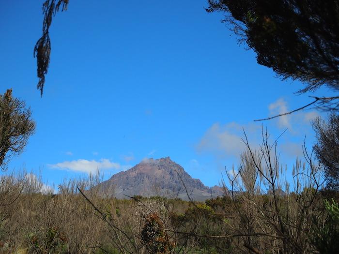 見えてきたマウェンジ峰(5149m)