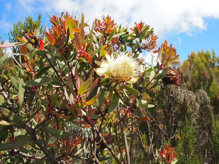 菊かダリヤのような大ぶりの花