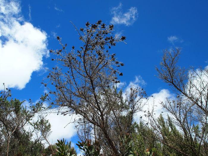 カラカラになった上に真っ黒になった花