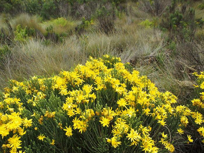 これも黄色い花。若干みずみずしい