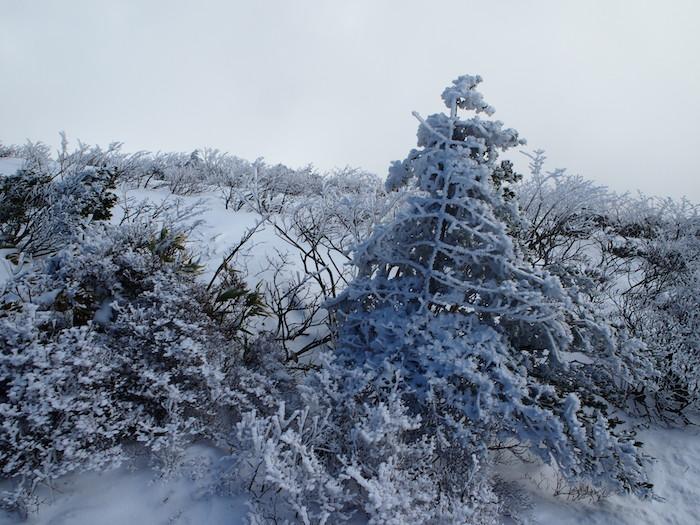 クリスマスツリーのような木々