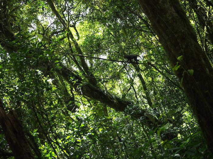ほどなくして、あのジャングル地帯に