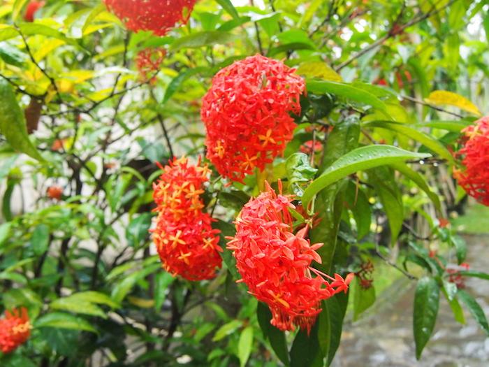 雨季は終わっても花がたくさん咲いていた