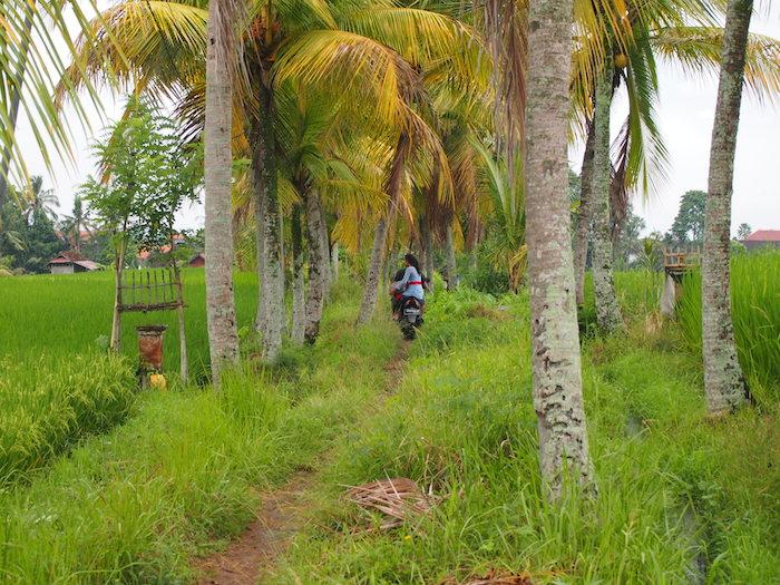 正装のカップルが二人乗りで田んぼの道を走ります。絵になるなー