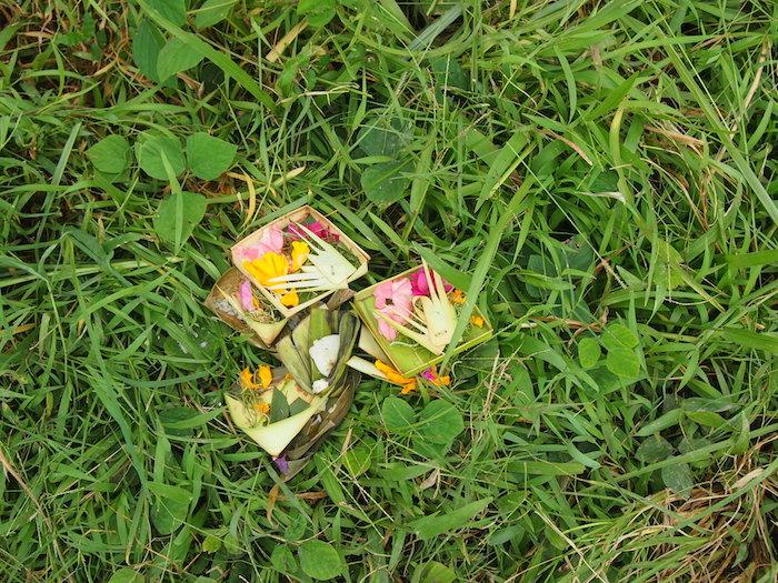草むらに何気なく置いてあるチャナン