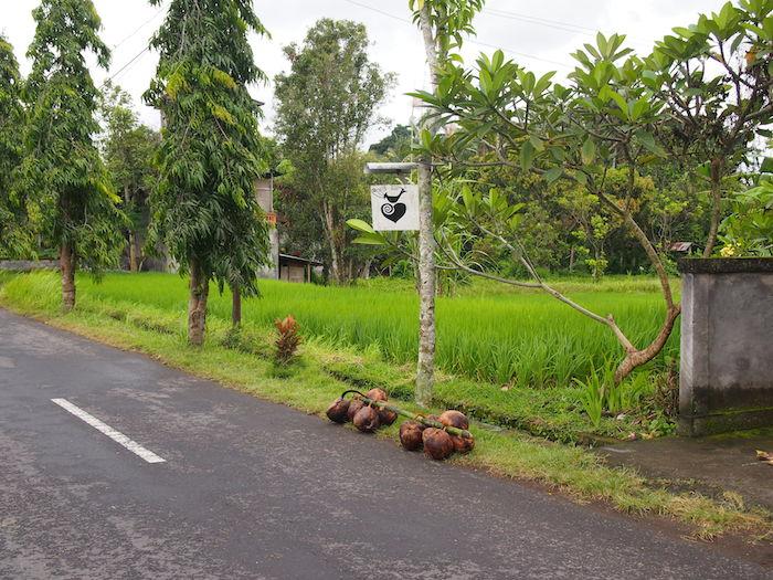 道っぱたに貯めてある椰子の実と、ナゾの鳥マーク