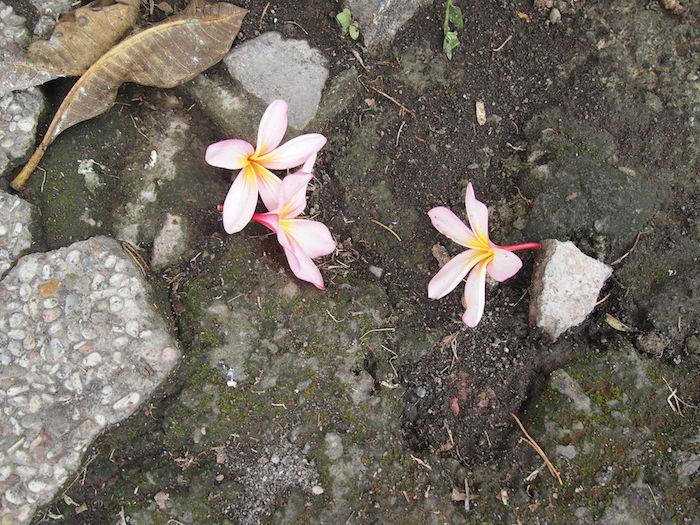 足下には儚げな花が