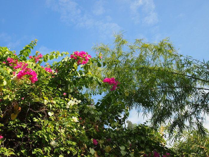アユさんはバリ島の花の色のように明るく快活なお人柄でした