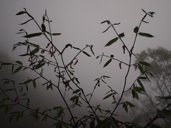 しかし霧で曇天。雨が降らないだけセーフ
