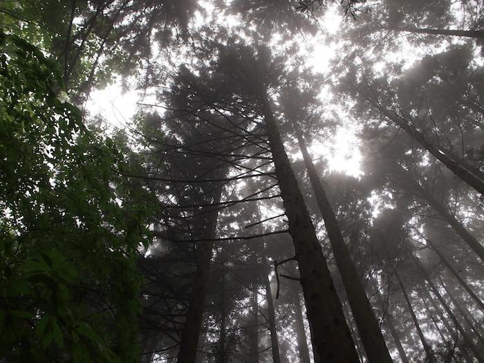 木々からしずくが滴り落ちる