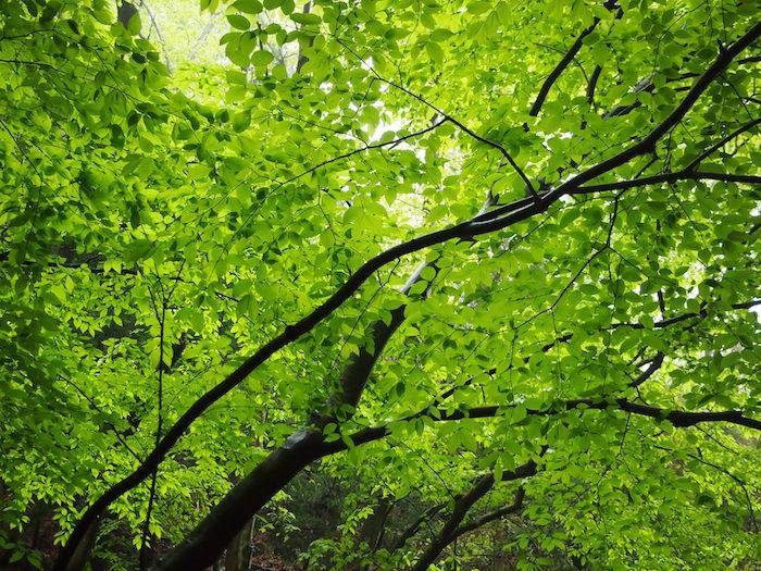 日はささないけど空がだんだん明るくなってきた。緑がきれい