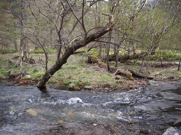 曇っていますが、川の水は透明で、さすがにさわやかです。