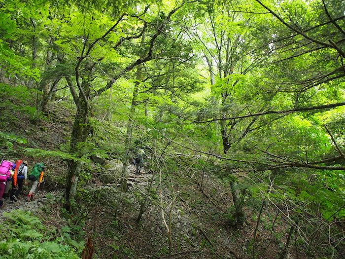 緑の中をひたすら登り続ける