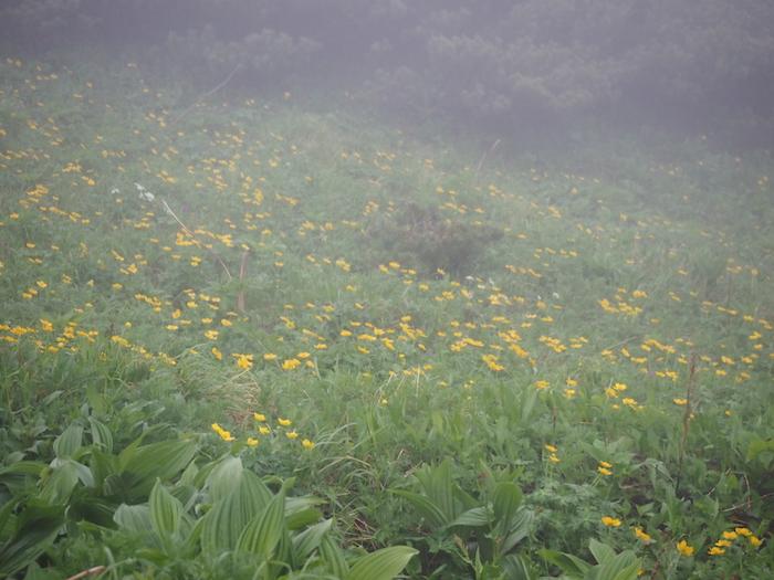 花畑もこのとおりガスの中