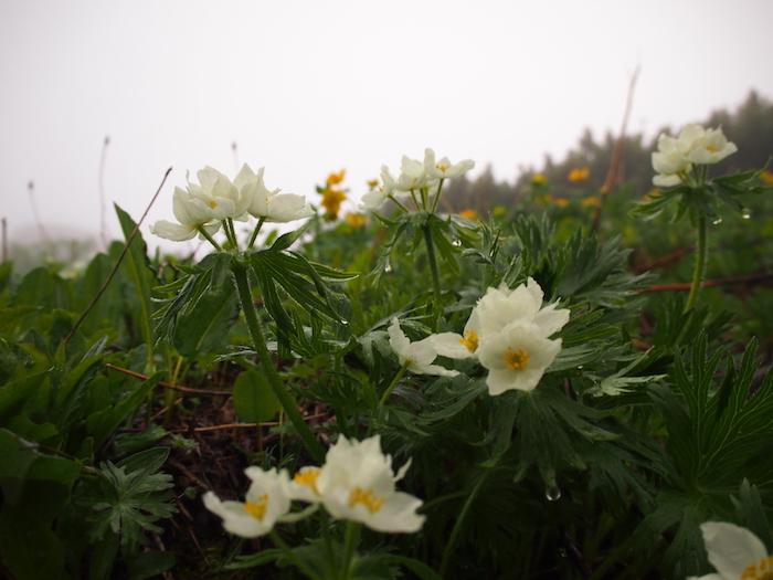 花たちも水に濡れて花びらが透明に