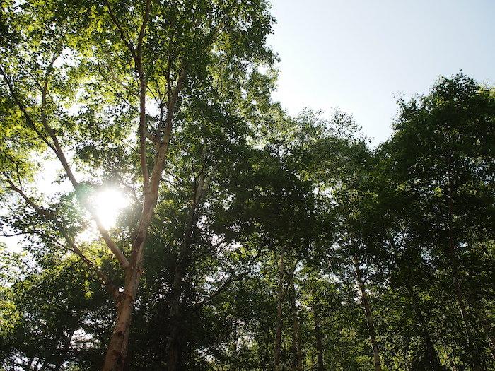 樹林帯を歩く、歩く