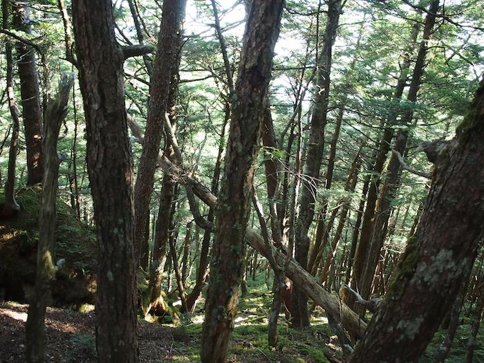 樹林帯に突入。ここからはひたすら下り・・・