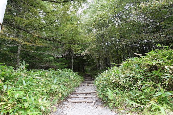 しばらくは整備された樹林帯の中を通ります