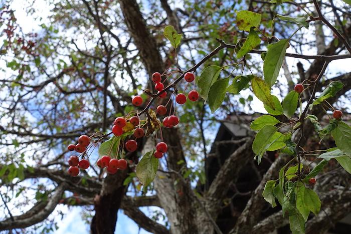 木の実だって美しく