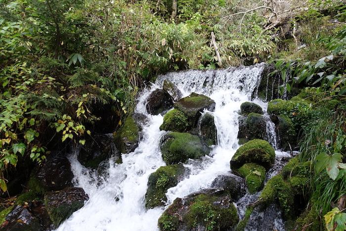 山からのお水が豊富です