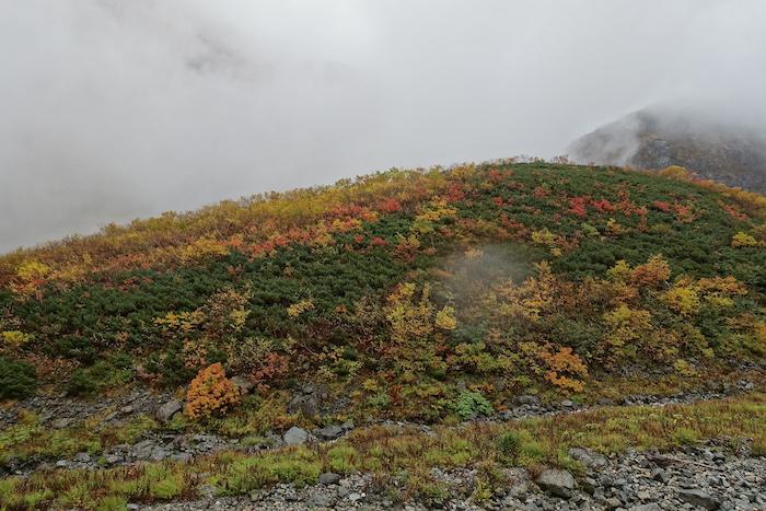 熟しすぎたブロッコリーのような紅葉